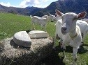 Produits chèvre
